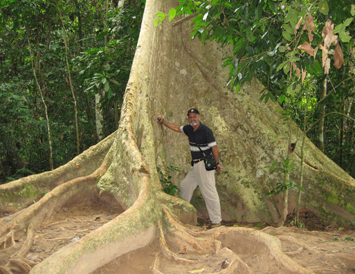 Walt by the buttress of a taulang tree