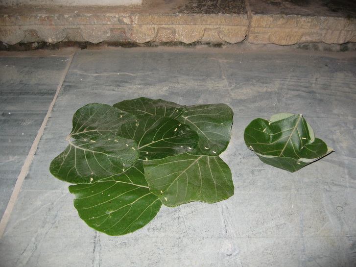 Dinner plate and bowl made from leaves