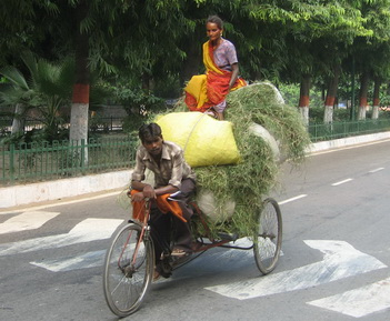 Bicycle carring hay