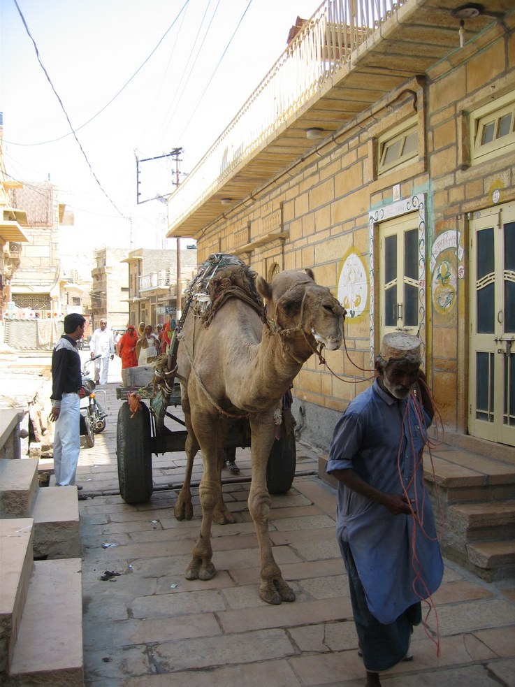 Camel cart in the street