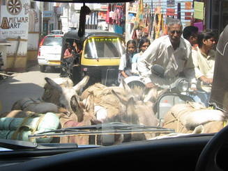 Donkeys blocking traffic