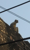 Monkey sitting on a roof
